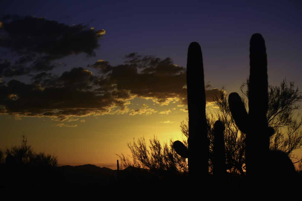 Arizona sunset Saguaro cactus (binomial name Carnegiea gigantea) in silhouette in Saguaro National Park West, Tucson, Arizona, with copy space at left